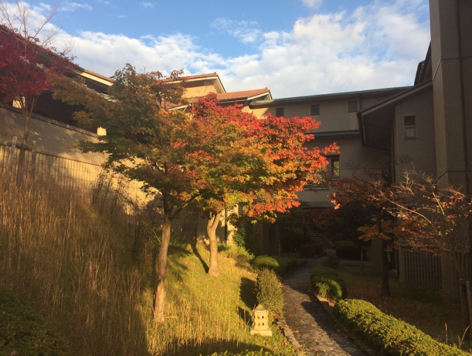 The stunning seasonal changes at Nichibunken. Photo Courtesy of Hannah Bayley